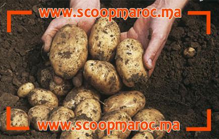 وفاة أسرة كاملة بسبب تصرف خاطئ من الأم.. إحذر البطاطا!